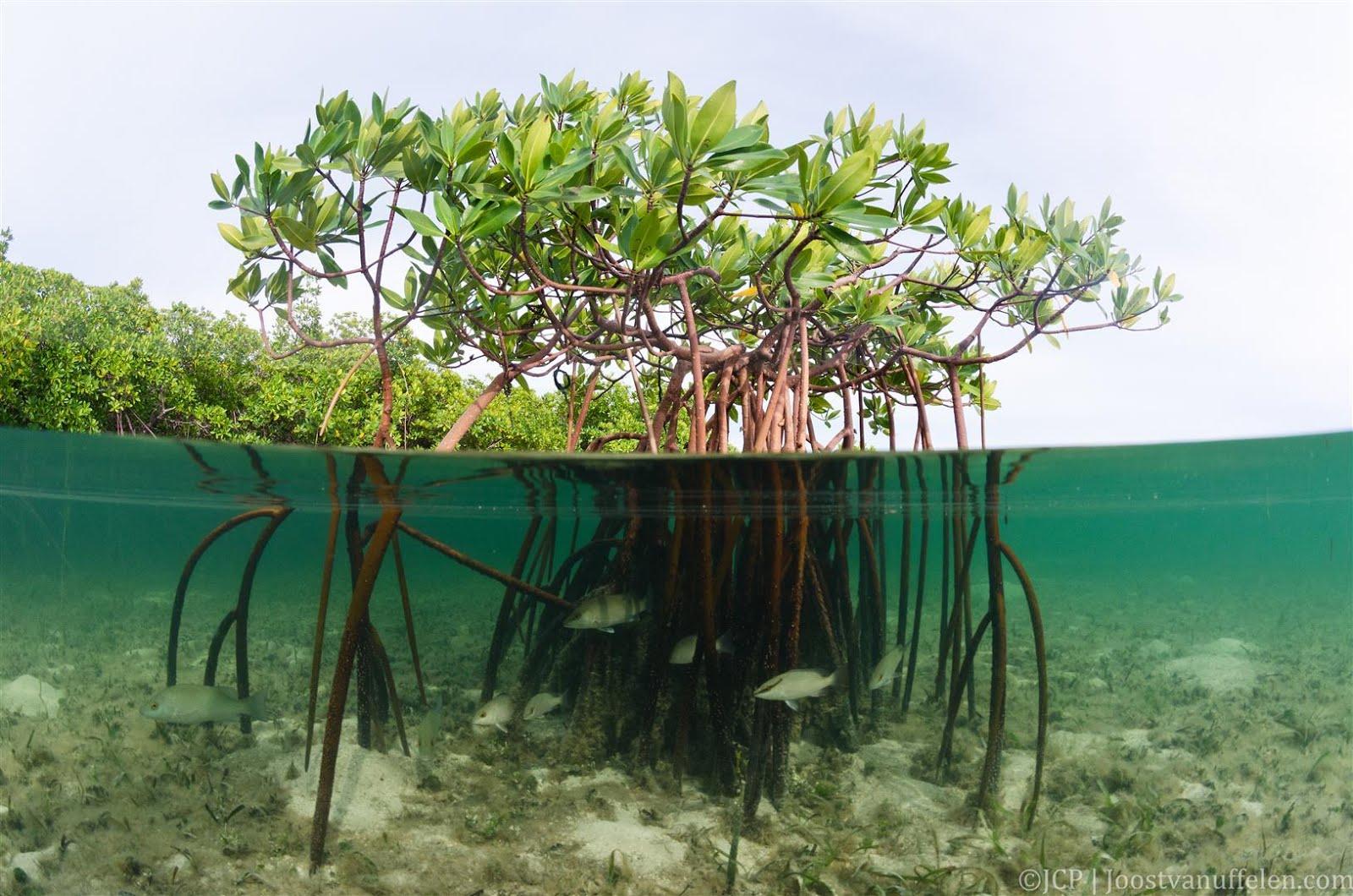 153 International Conservation And Restoring Degraded Habitats