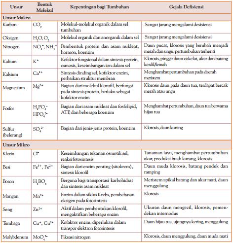 Nutrisi yang merupakan faktor Eksternal Pertumbuhan & Perkembangan Tumbuhan