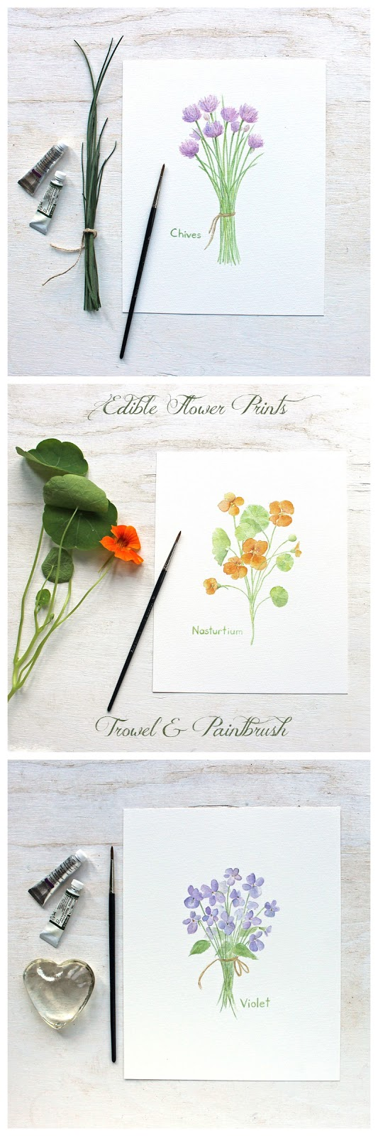 Botanical watercolor prints by Kathleen Maunder: chives, nasturtium and violet