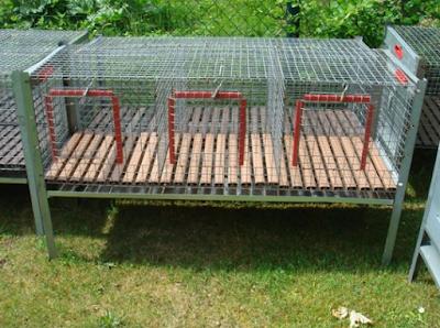 Kandang Kelinci Kombinasi kawat dan bambu dan kayu
