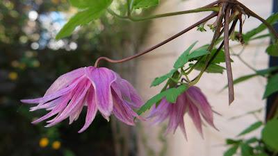 стихи, цитаты, легенды о цветах