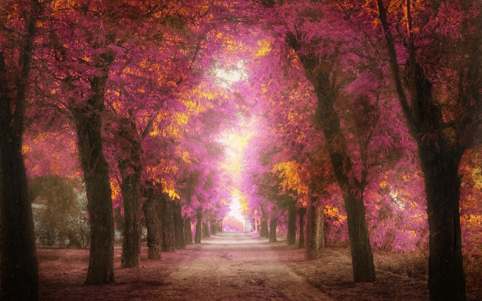Romanticos Fondos De Pantalla: Imagenes Hilandy: Fondo De Pantalla Paisajes Camino Romantico