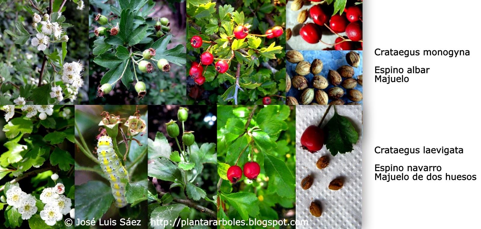 plantas con frutos y semillas