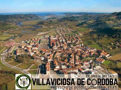 Villaviviosa pueblo incluido en el Proyecto del Arbolímetro