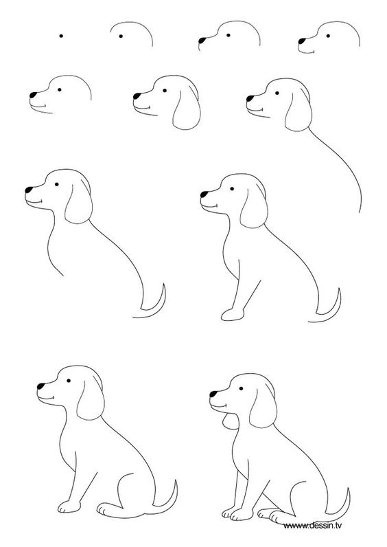 Рисунки карандашом для начинающих: животные поэтапно