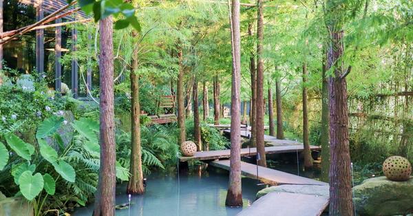 台中北屯澄石享自在生態園區走木棧道進入落羽松秘境,享受輕鬆自在