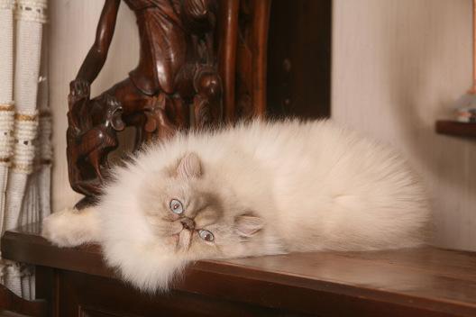 Gdy kot zostaje pod czyjąś opieką.