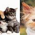 Evde Beslenen Kediye Parazit Aşısına Gerek Yok Mudur?
