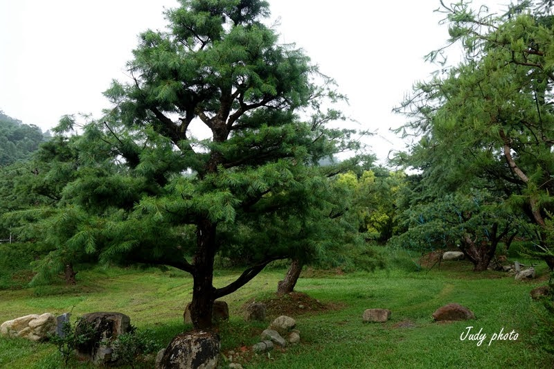 【埔里民宿露營】拂水山莊五葉松綠樹成蔭鬱鬱蒼蒼很美的地方~ @ Enlly yo Taiwan :: 痞客邦