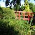 ogród japoński  (Hortulus Dobrzyca)