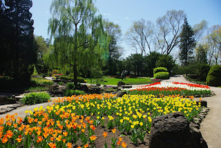 Tulips at the Royal Botanical Gardens