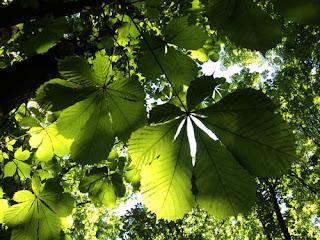 colore verde,fotografia