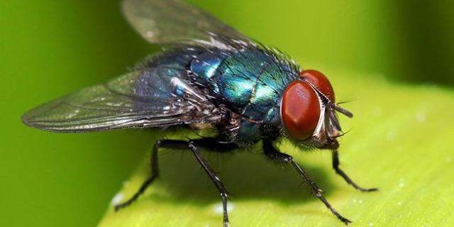Penjelasan Ilmiah Mengapa Air dalam Plastik Efektif Usir Lalat