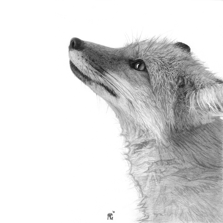 19-Master-Fox-Matthew-Greskiewicz-Realistic-Graphite-and-Charcoal-Drawings-www-designstack-co
