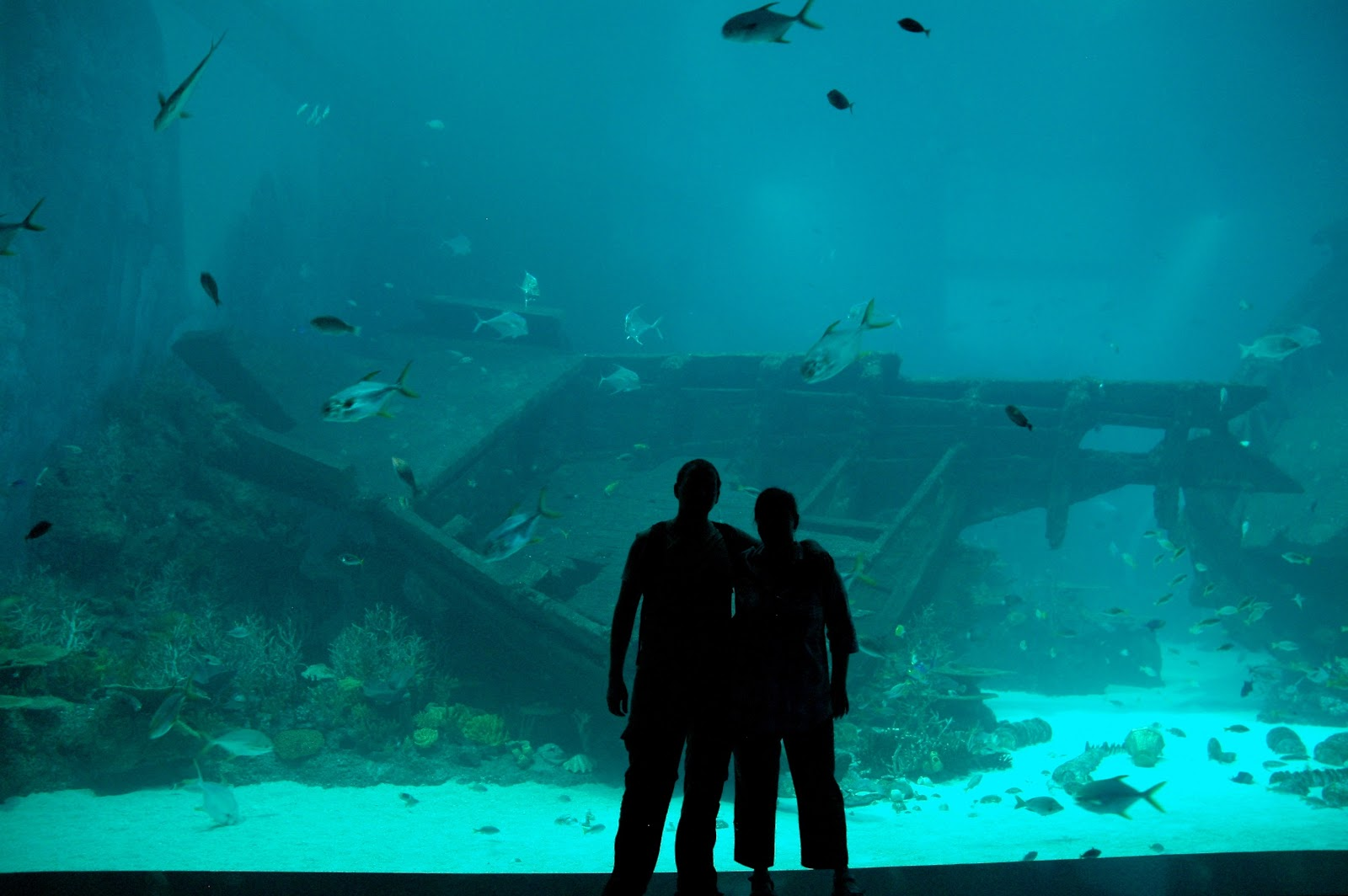 the biggest aquarium ine world