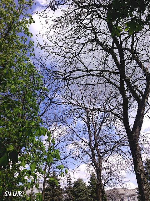 деревья в Луганске