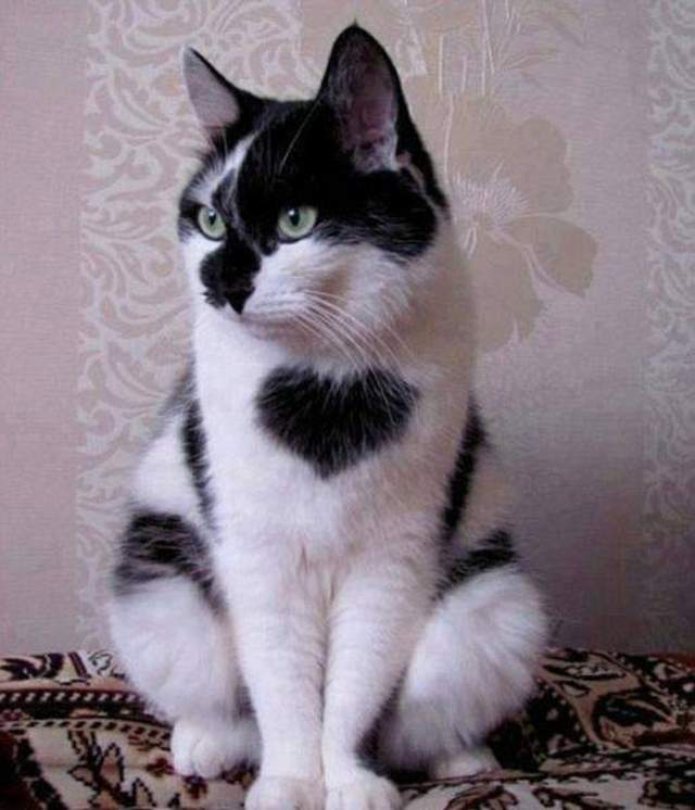 Funny cats - part 247, best cat picture, cat and kitten pictures, cute cat images