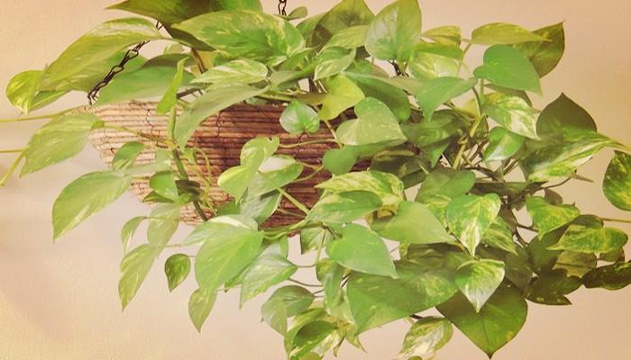 Plantas para poca luz