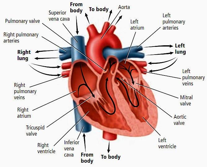 Serangan Penyakit Jantung