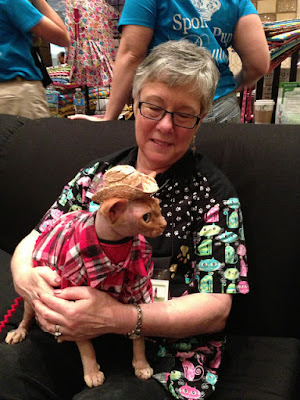 Disco the Sphynx in red plaid shirt and straw cowboy hat
