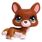 Littlest Pet Shop Singles Corgi (#897) Pet