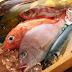 Εννιά ψάρια που καλό είναι να περιορίσετε ή να αποφεύγετε – Δείτε γιατί…