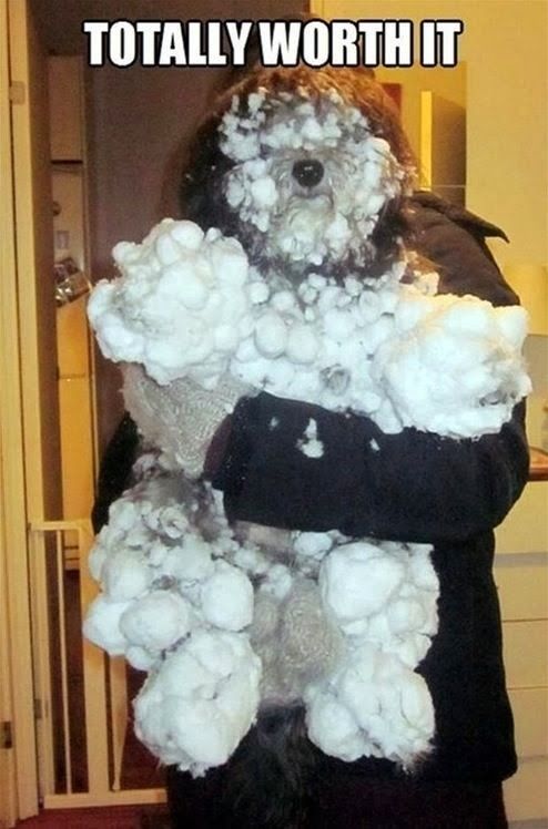 Funny Dog Playing Snow Meme - Totally Worth It