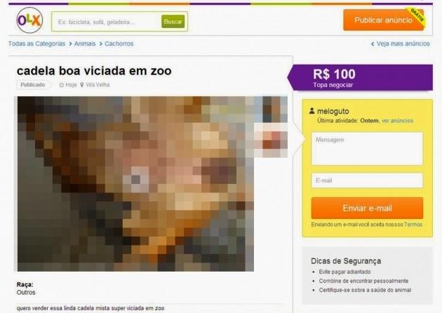 LOBO REPÓRTER: OLX publica anúncio de zoofilia, ativistas reagem