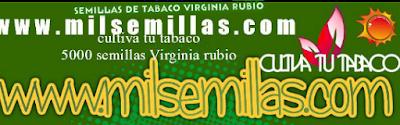 Cultiva tu Tabaco es Facil Compra tus Semillas De Virginia Rubio de Calidad en_: