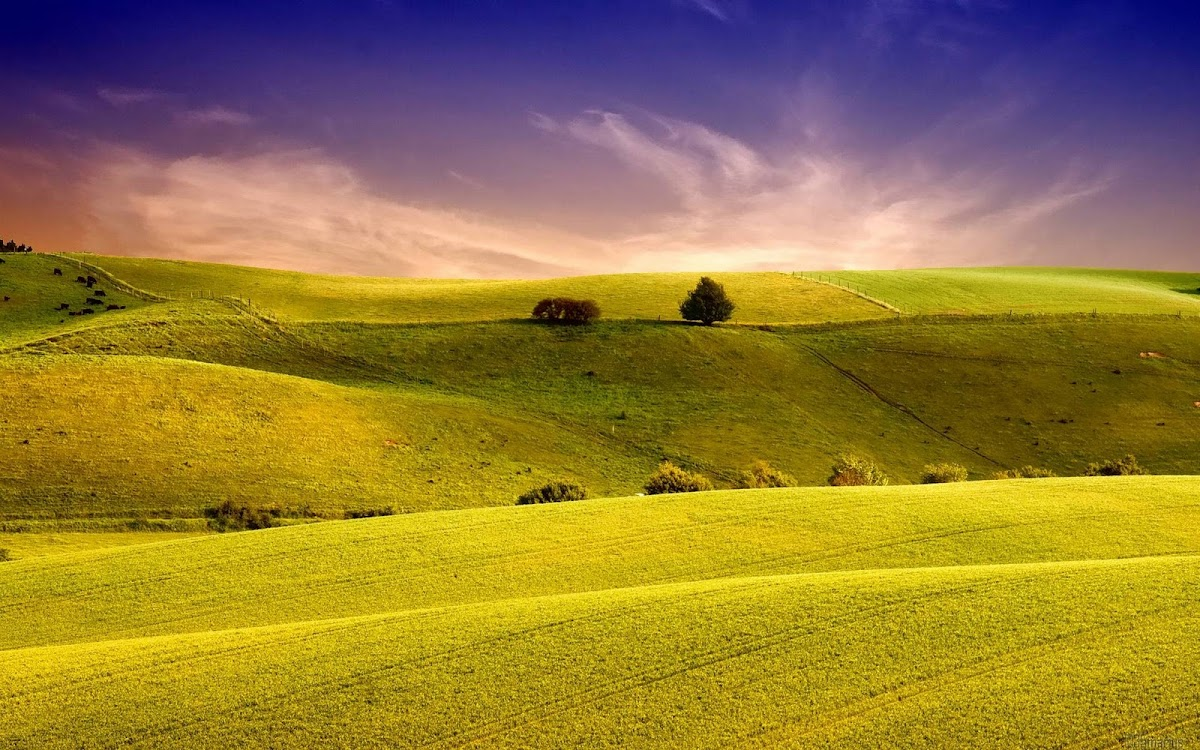 Amazing Field Widescreen HD Wallpaper