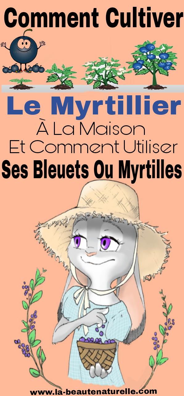 Comment cultiver le myrtillier à la maison et comment utiliser ses bleuets ou myrtilles