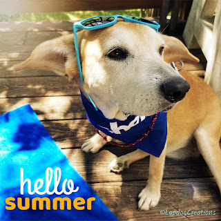 dogs golden retriever beagle senior summer cute puppy