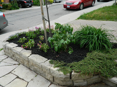 New front garden makeover in Wychwood after by Paul Jung Gardening Services--a Toronto Gardening Company