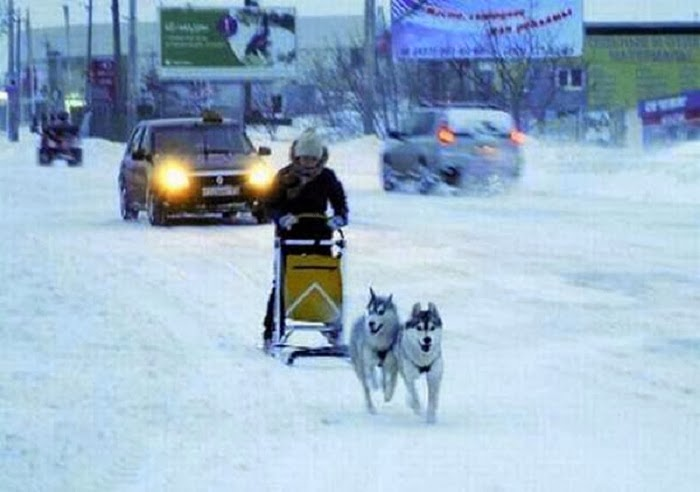 Those with dogsleds? Royalty.