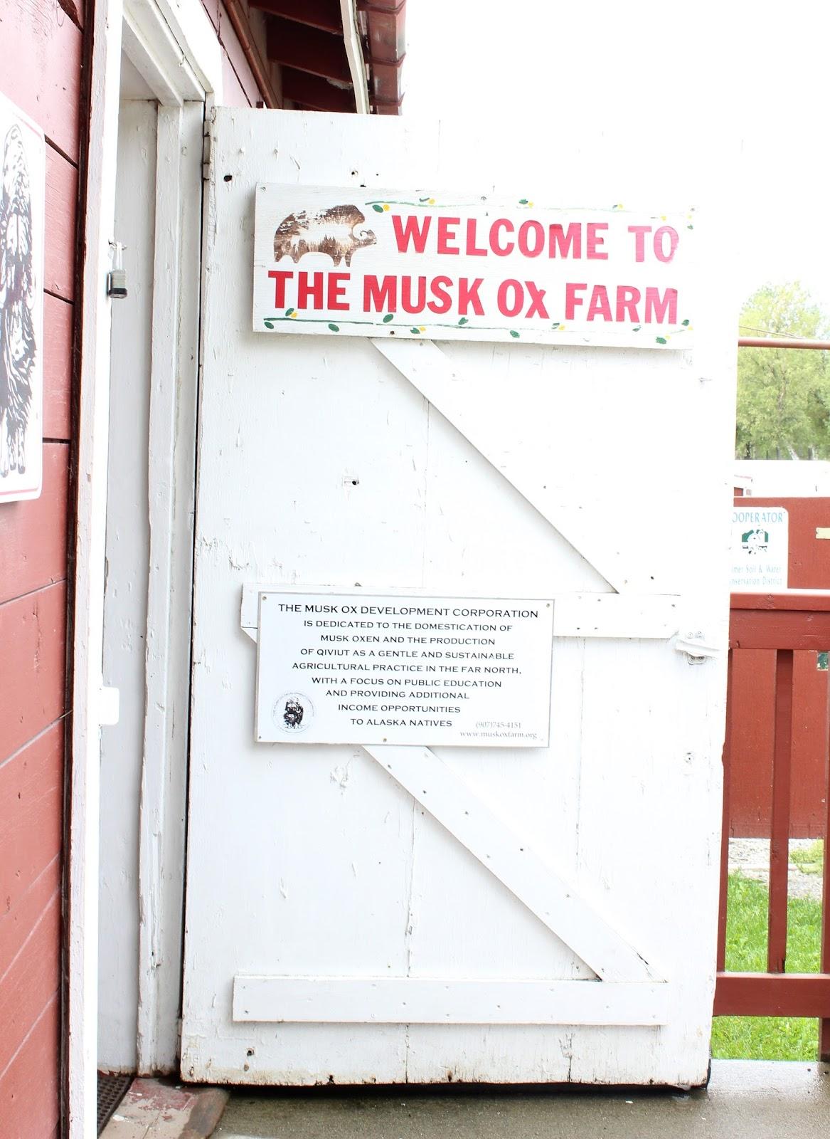souvenir chronicles alaska a musk ox farm and a reindeer ranch