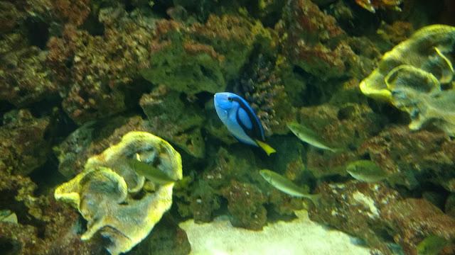 דגי ים בשלל צבעים