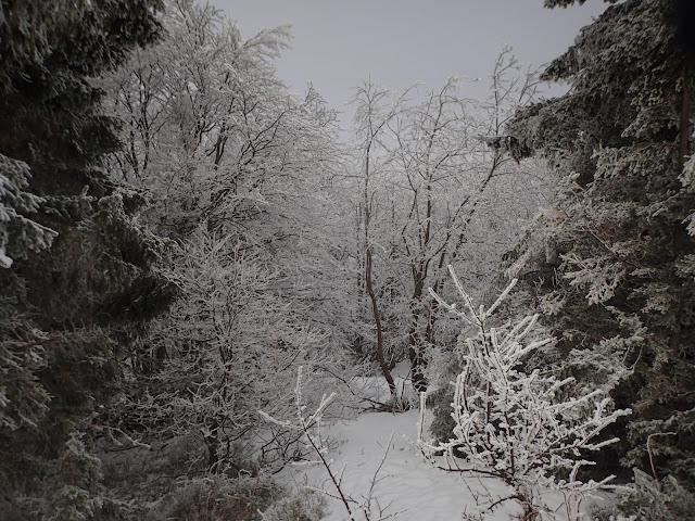 Beskidzki, zimowy las