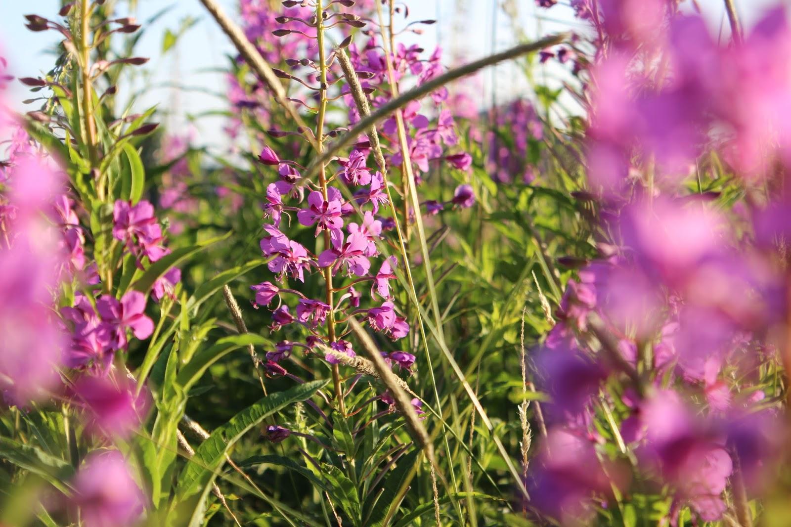 Картинки растений вологодской области