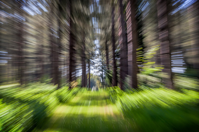 Pine trees and grassy pathway with intentional camera movement