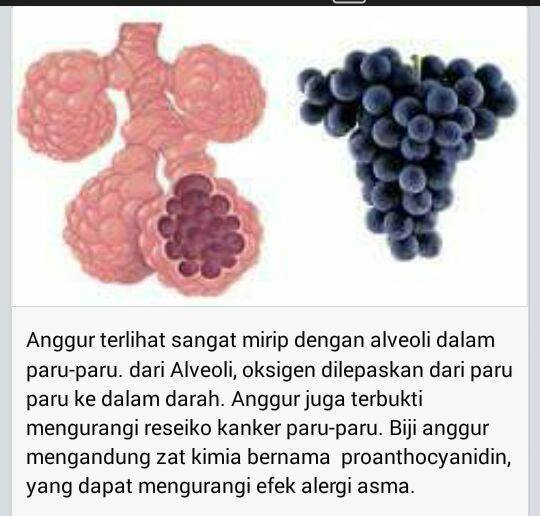 Buah Anggur yang menyerupai Alveoli