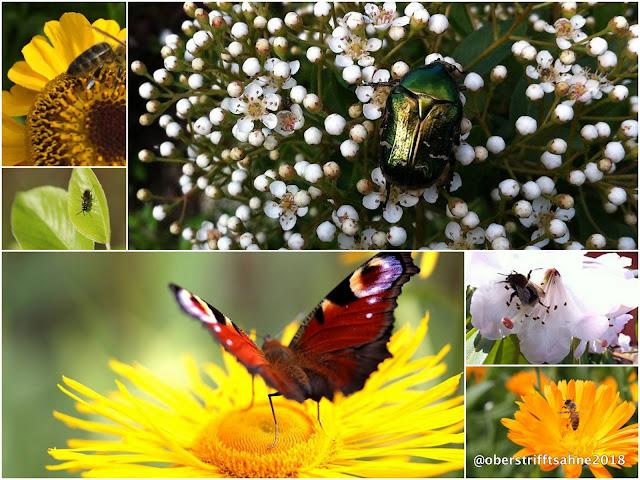 NABU Insektenzählung 2018