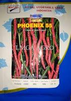 lmga agro, cabe phoenix 55, toko online, toko pertanian, harga murah, cabe keriting, benih, bibit