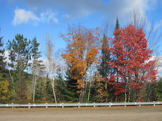 Algonquin Parking Lot Fall Colours.