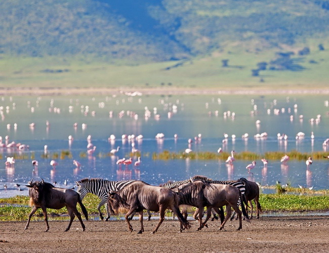 Xvlor Ngorongoro Conservation Area is beauty of crater highlands wildlife