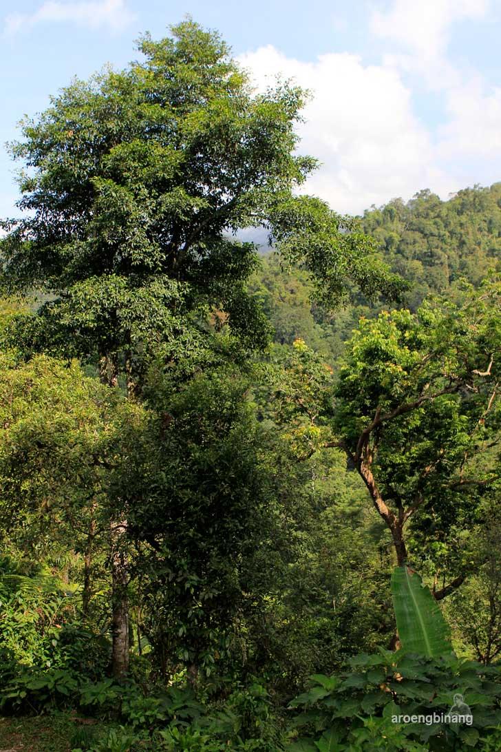 [CoC Regional: Lokasi Wisata] Pancuran Pitu Baturraden Banyumas