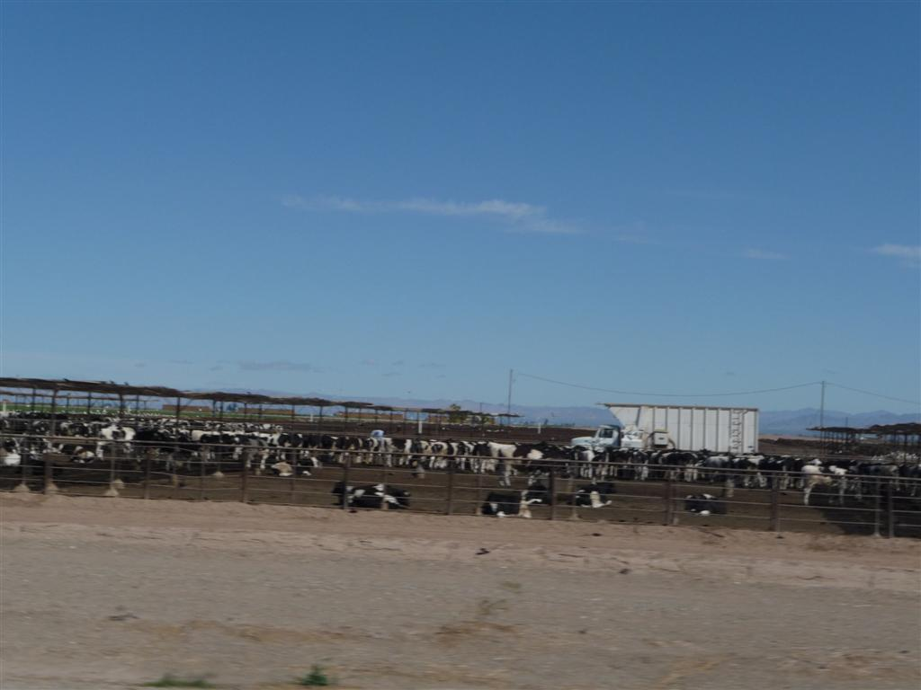 Bp Gas Prices >> Skid and Sandy On The Road: Yuma Arizona: Slab City and