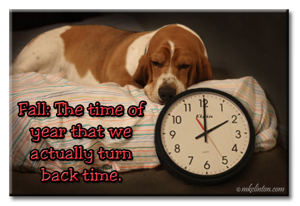 "Bentley Basset Hound meme ""Fall: The time of year that we actually turn back time."""