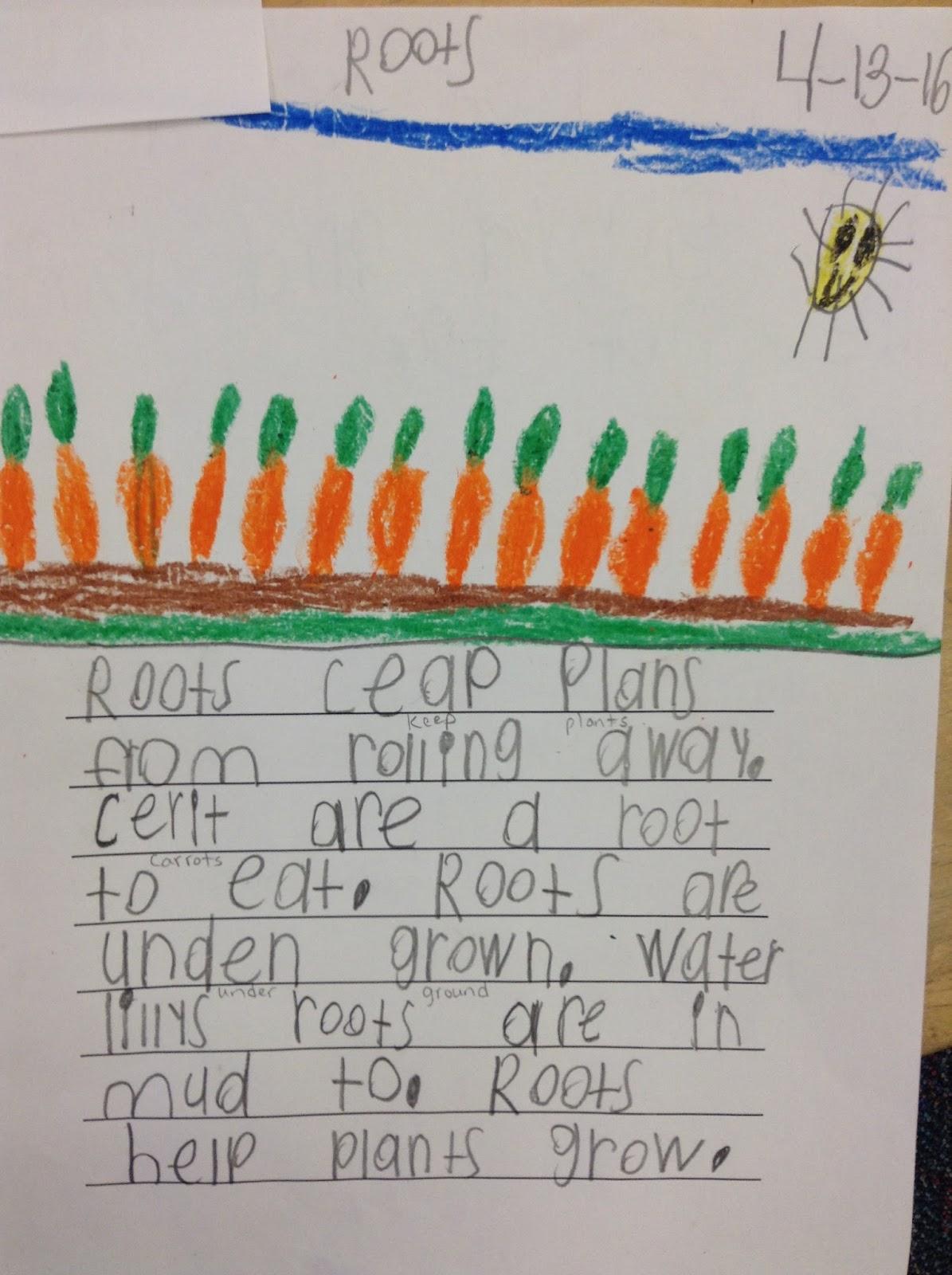 Dr Clements Kindergarten Plants Planting Seeds And