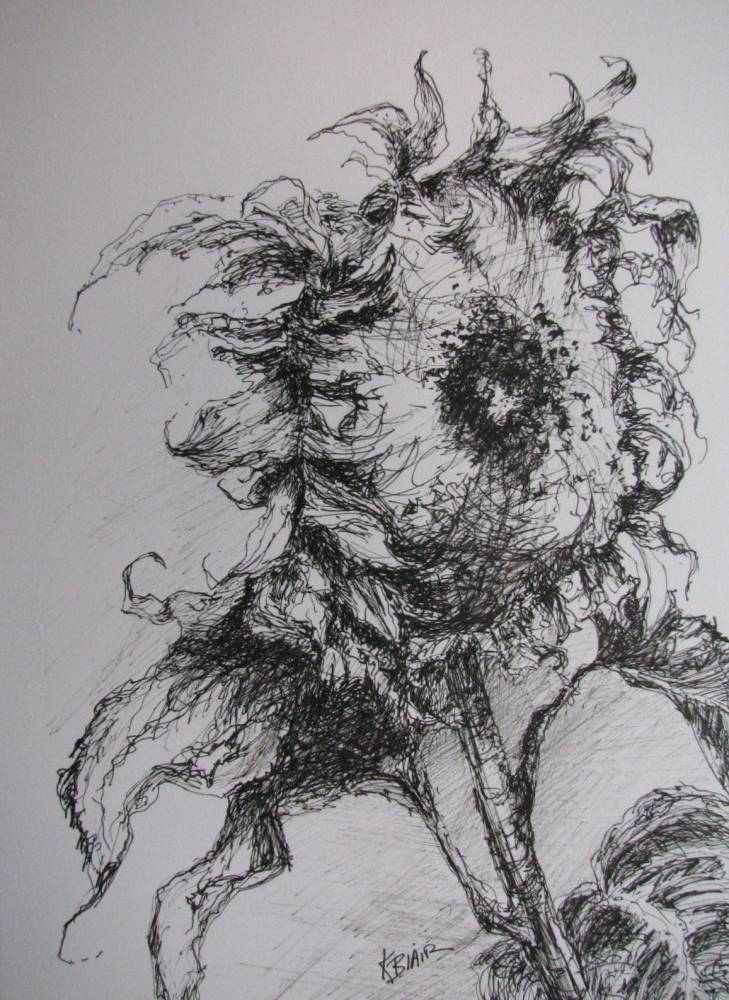 Kim Blair: Pen And Ink Drawing Of A Sunflower, Medieval