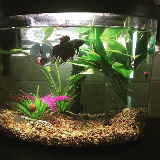 L 39 aquarium la maison les r sultats du concours photo for Aquarium petit prix
